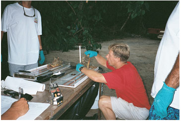 Picture 17. Measuring Conch Length