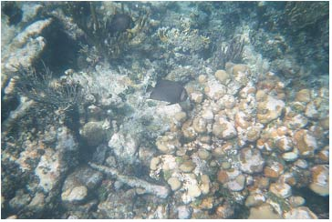 Picture 29. Corals and Fish from Location 4