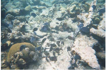 Picture 27. Fish around Coral Reef