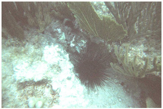 Picture 21. Sea Urchin