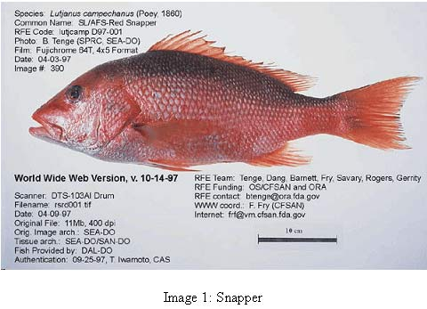 image 1 photo of fish common name snapper