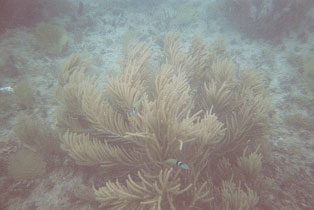 Picture 24. Soft Coral