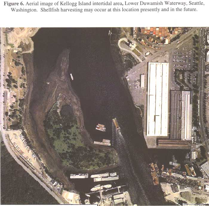 Aerial image of Kellogg Island intertidal area, Lower Duwamish Waterway, Seattle, WAshington. Shellfish harvesting may occur at this location presently and in the future