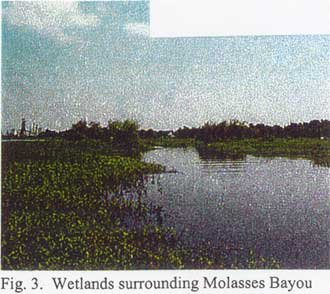 Wetlands surrounding Molasses Bayou