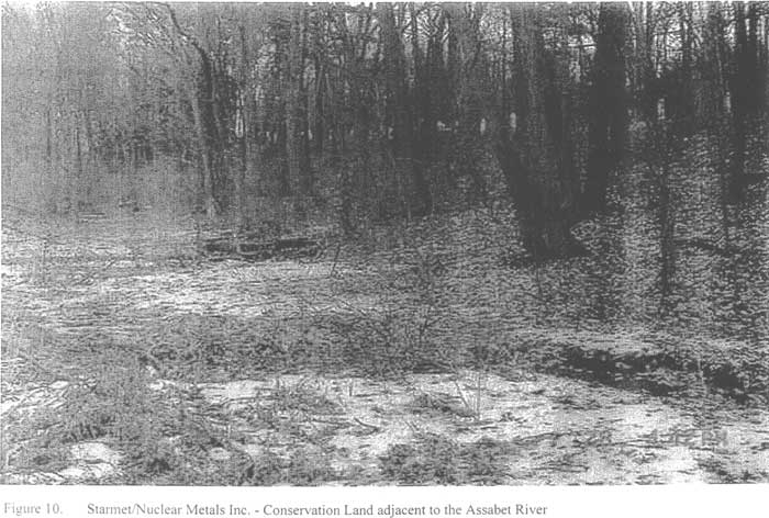 Conservation Land adjacent to the Assabet River