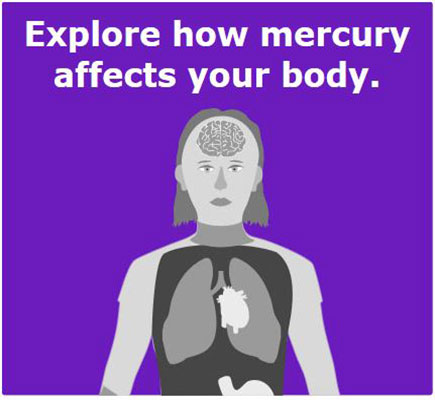 explore how mercury affects your body