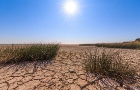A hot bright sun beats down on parched, cracked soil.