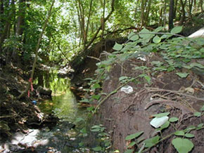 Prior manufacturing and disposal activities left ACM along the Wissahickon Creek, on the stream banks, and along adjacent trails.