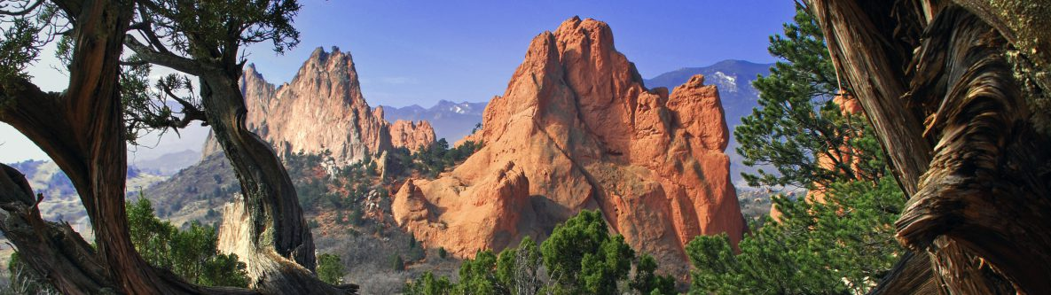 Garden of the Gods framed by twisted Juniper Trees